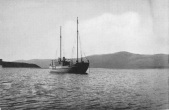 photo pereserverance harbour Campbell Islands