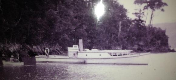 Iris in Pelorous Sound 1926