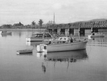 MILADY 1955 BY R LIDGARD TAKEN IN TAURANGA c1980s -- (B & W)