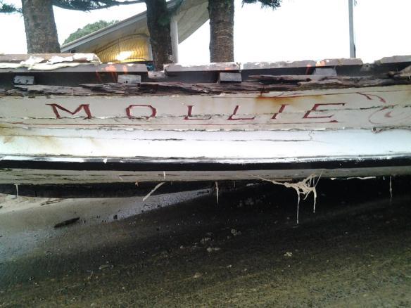 MOLLIE - 12