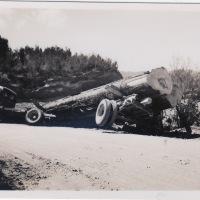 Rotorua Woodys + Goodsons Trucking