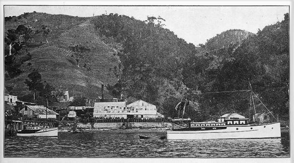 1928 Whangamumu